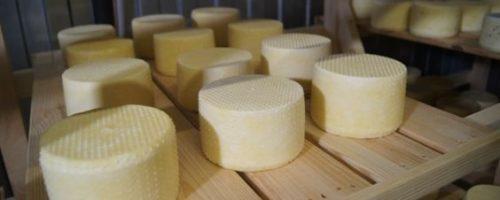 Как изготовить твердый сыр своими руками. Организация бизнеса по сыроварению