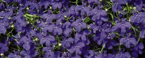 Цветочные садовые посевы в феврале